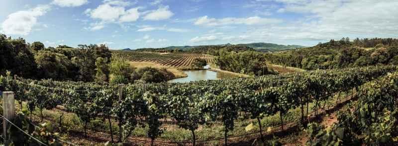 Condição climática rara deve resultar em vinhos de excepcional qualidade ALE SCOTTON/DIVULGAÇÃO/JC
